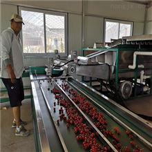 6XY-2樱桃选果机  分选线 采摘后的处理设备
