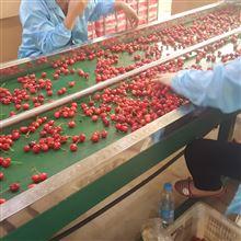 6XY-2山东樱桃选果机厂家 质量信得过