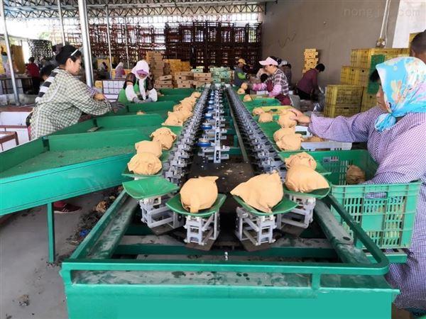 褚橙分级机分果机 多功能水果重量分选设备