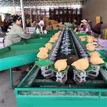 XGJ-SZZ新疆甜瓜选果机 分选甜瓜大小的机器