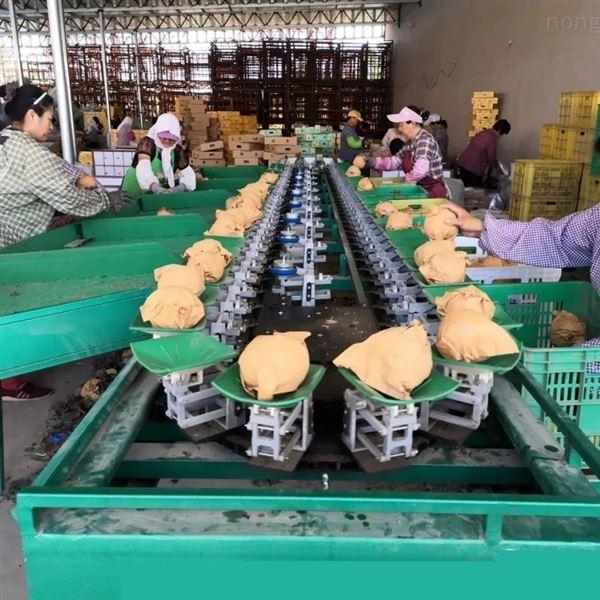 新疆糖心苹果选果机 水果分果机分级机