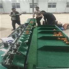 XGJ-Z中国台湾青枣分选机重量分级设备分青枣的机器
