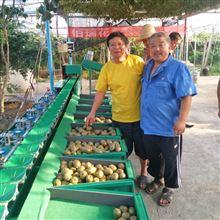 XGJ-SZ福建人参果分选设备 挑选果蔬大小的机器