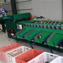 6XZ-15000贝贝南瓜分选机果蔬挑大小的机器省时省力