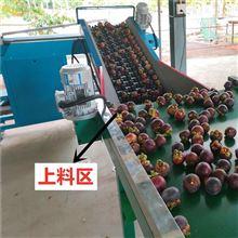XGJ-DN山竹分拣机果蔬怎样挑选大小水果选果机厂家
