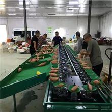 XGJ-SZ山东烟薯分级设备  红薯重量分拣机