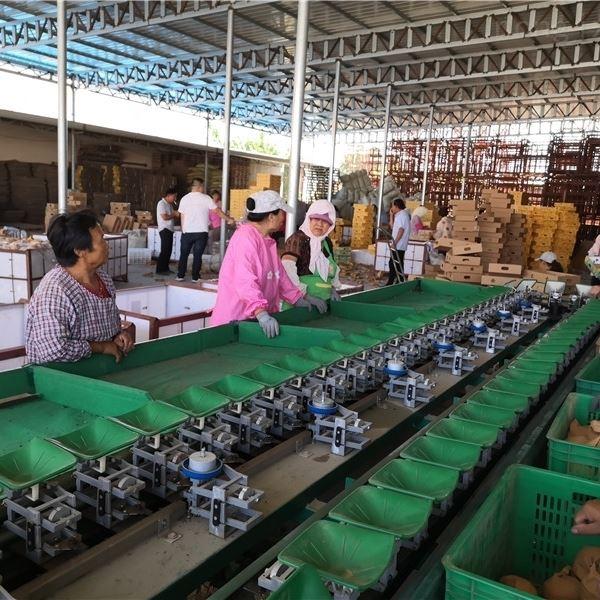 猕猴桃分级机  陕西眉县选果设备