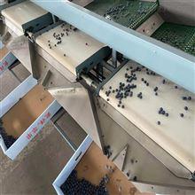 LMXGJ-2青岛蓝莓选果机  直径分选  不伤果粉的机器