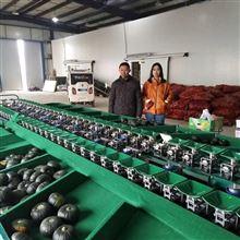 XGJ-SZ潍坊贝贝南瓜分级机  重量分大小 不伤果