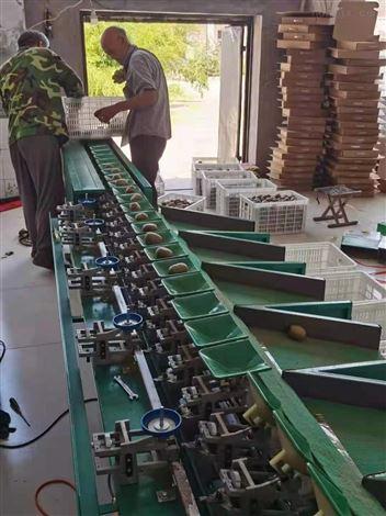 猕猴桃选果机   陕西眉县分大小的工具