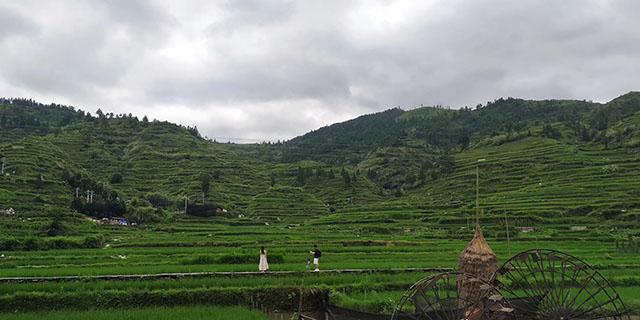 产业扶贫|云南省贫困地区农村居民人均可支配收入由7070元增加到10771元