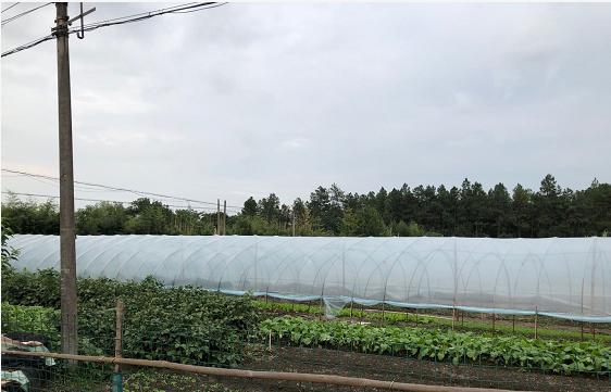 最高可补贴1.6万元/亩,大连市大力支持设施农业发展