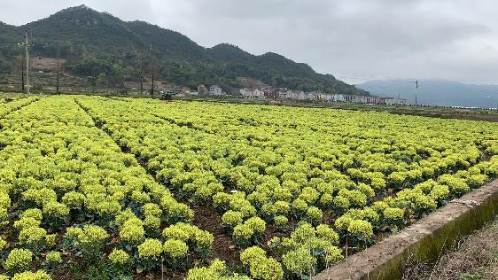 """上海市推进蔬菜生产""""机器换人"""",要求综合机械化水平不低于55%"""