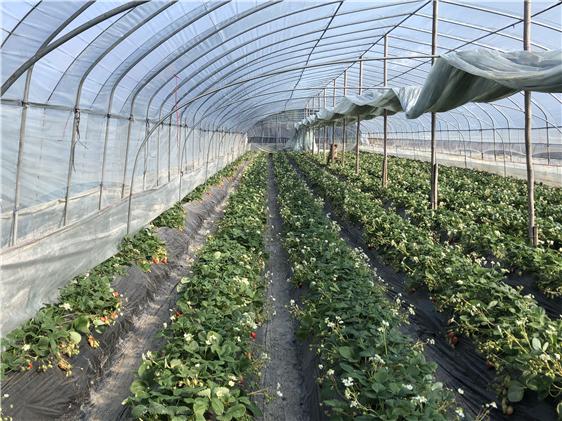 天津市2021-2023年农机购置补贴方案出炉