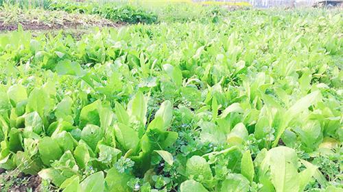 农机化总站关于遴选先进适用设施蔬菜种植机械装备的通知