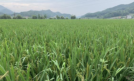 天津市:加強農機作業補貼,將收獲、植保、播種等作業環節納入農機作業補貼范圍