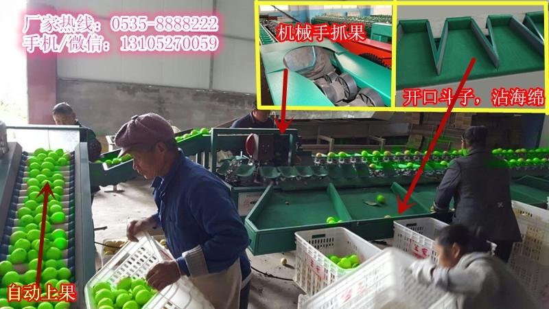 提高青枣市场占有率   凯祥青枣选果机   好的青枣选果机