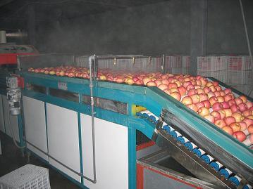 苹果清洗打蜡