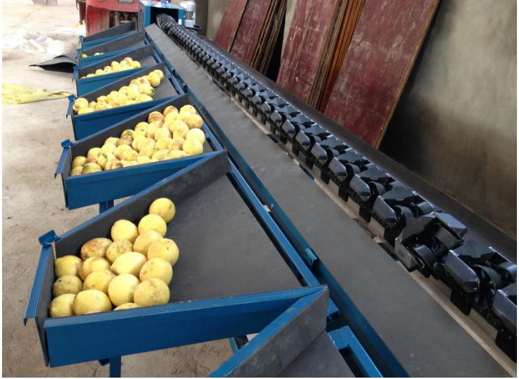 柠檬分选机